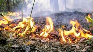 МЧС предупреждает об опасности выжигания сухой растительности